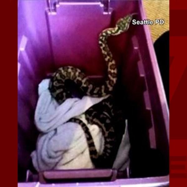 python-WEB_497177