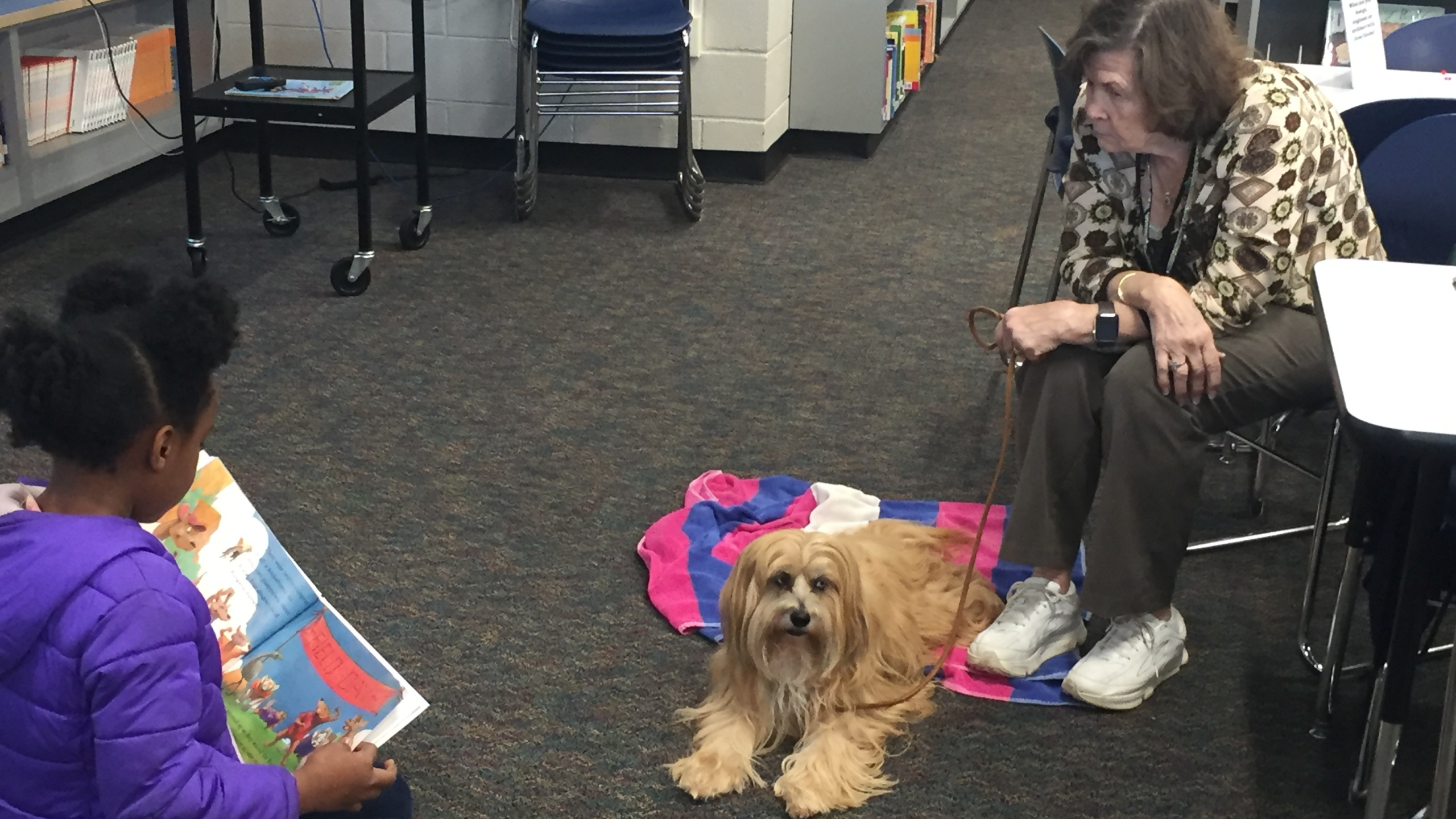 therapy dogs_499713