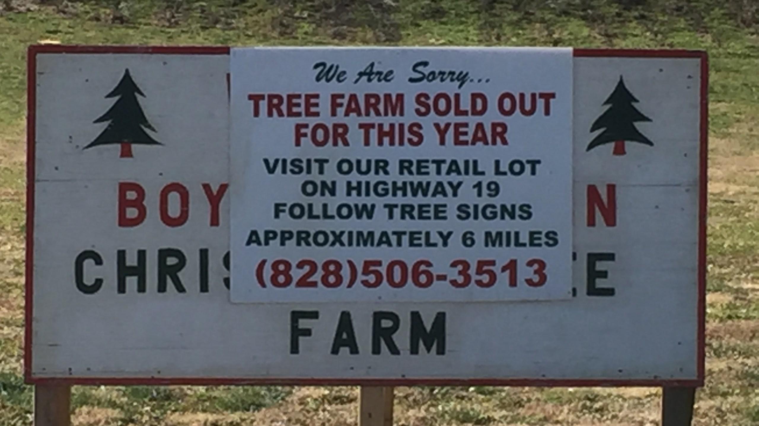 Trees (3)_499740