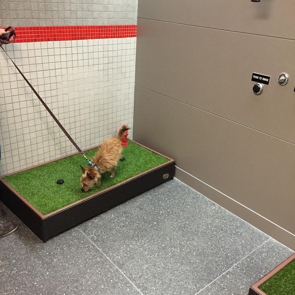 pet relief area_518624