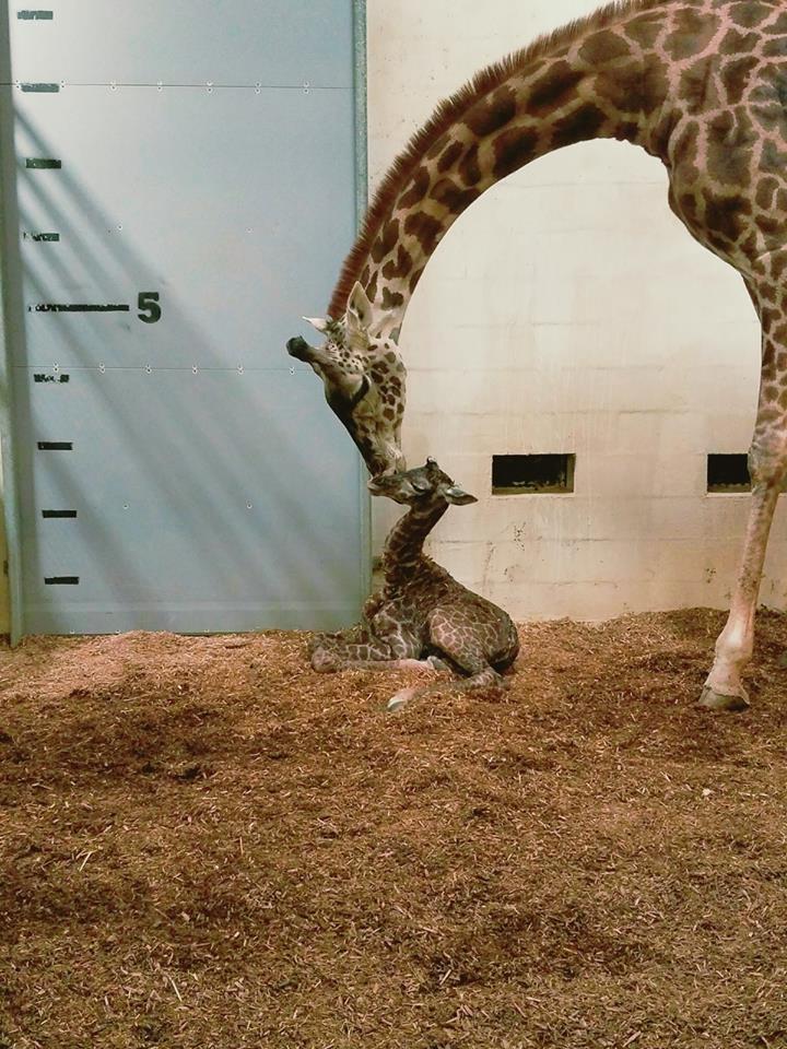 Courtesy Greenville Zoo Facebook
