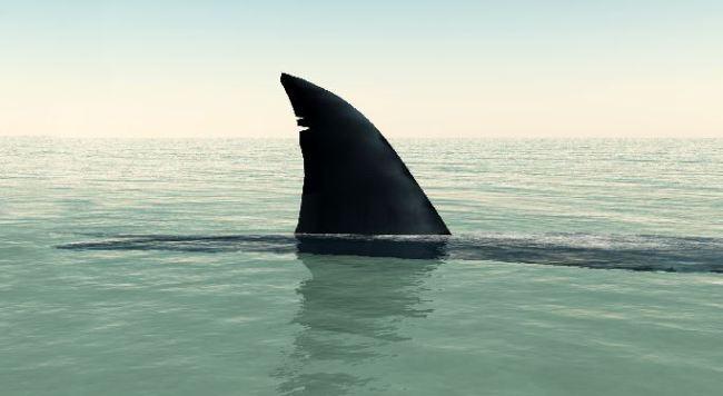 shark_418775