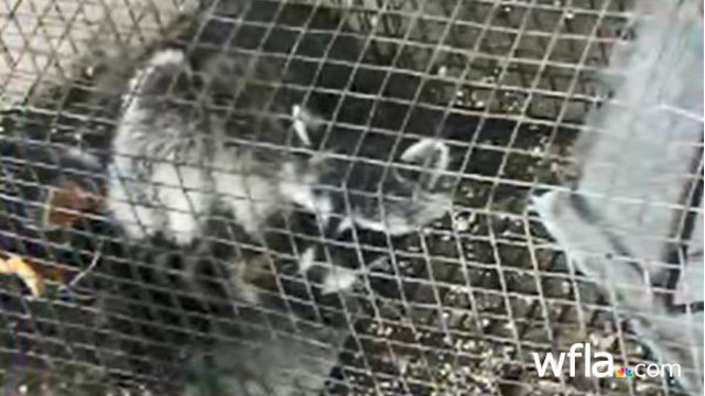 Teacher_accused_of_drowning_raccoons_dur_0_42753362_ver1.0_640_360_1527539955155.jpg