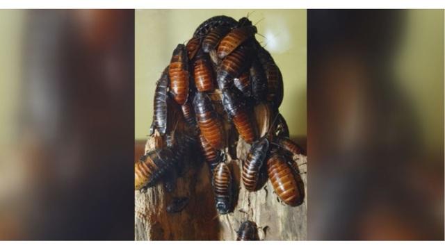 cockroaches_1527461213636_43698500_ver1.0_640_360_1527507412769.JPG