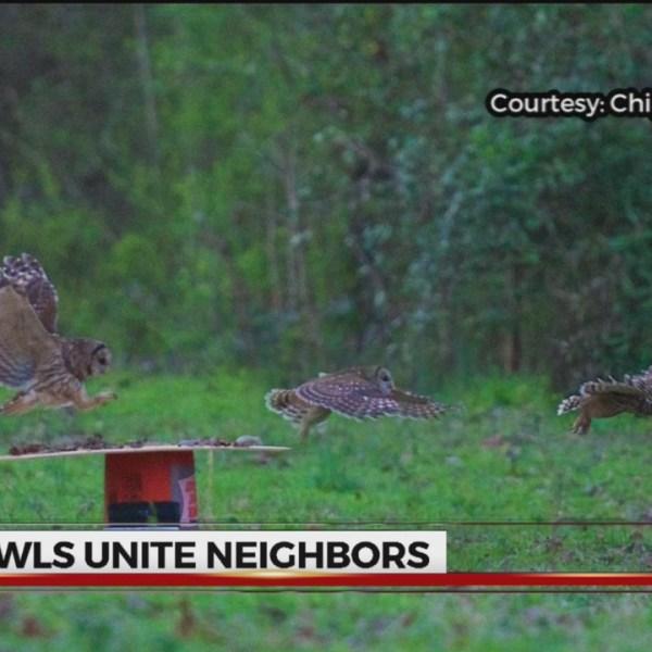 Owls unite Upstate neighbors