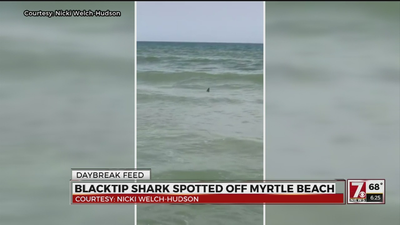 Video Shark Spotted Off Myrtle Beach Coast