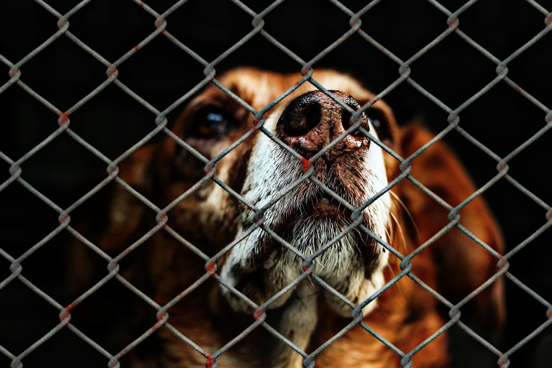 animal-welfare-1116203_1920_1529666557736.jpg