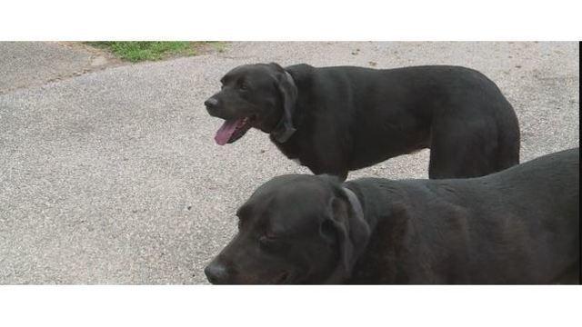 Dogs_1530871585624_47801707_ver1.0_640_360_1530886171253_47813774_ver1.0_640_360_1530887618453.JPG