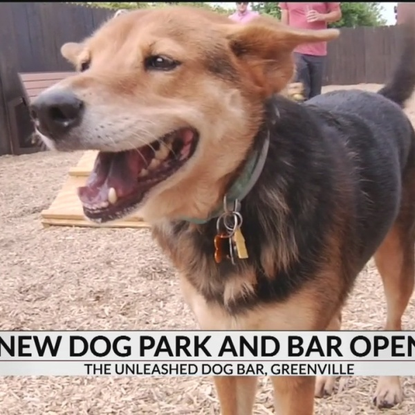 Dog park and bar opens in Greenville