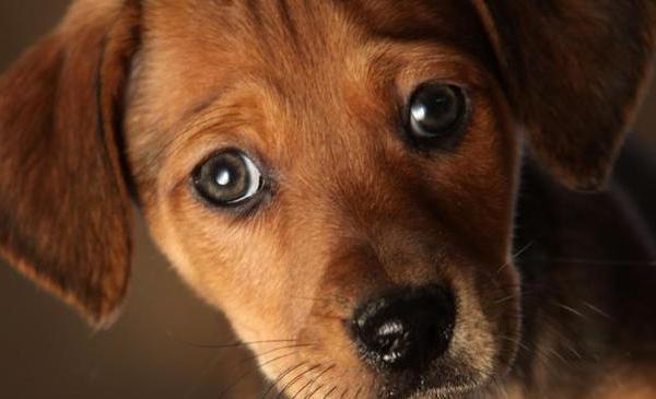 dog-generic_300588