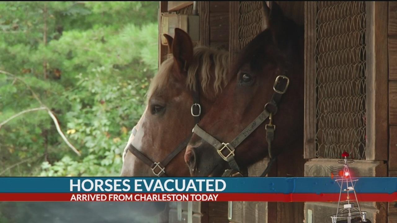 Charleston horse evacuees seek shelter in Tryon