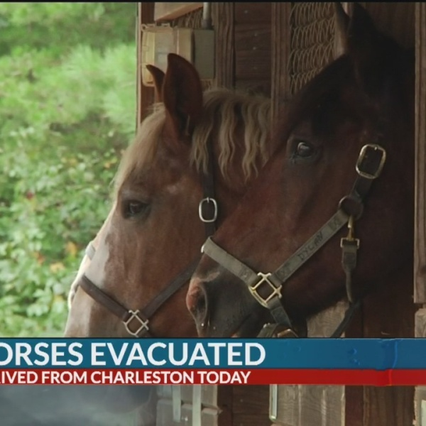 Charleston horse evacuees seek shelter in Tryon