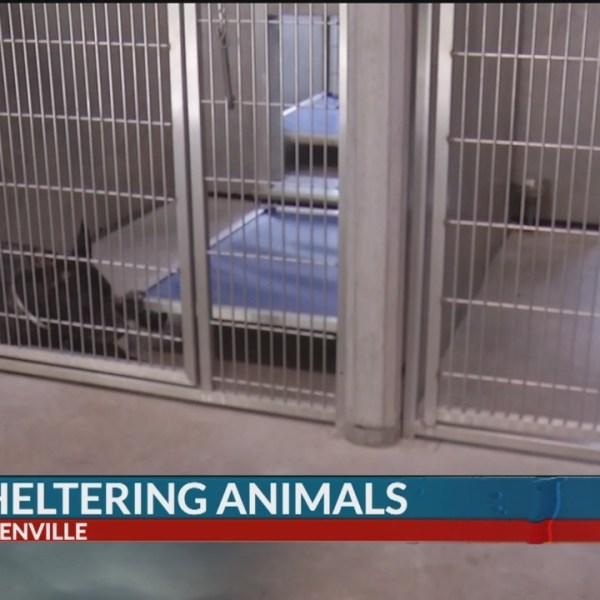 Upstate_animal_shelter_looking_to_adopt__0_20180915032648