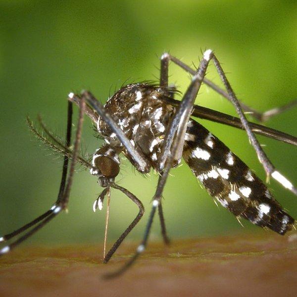mosquito-generic_444843