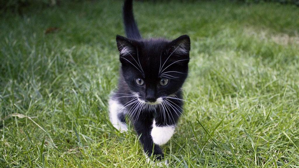 catnapping_1541020590908.jpg