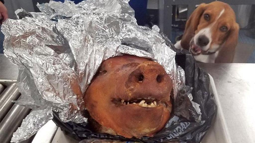 pig-head-169_1539712810656.jpg