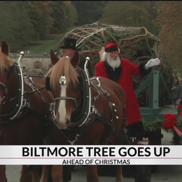 Christmas at Biltmore begins with annual tree-raising celebration
