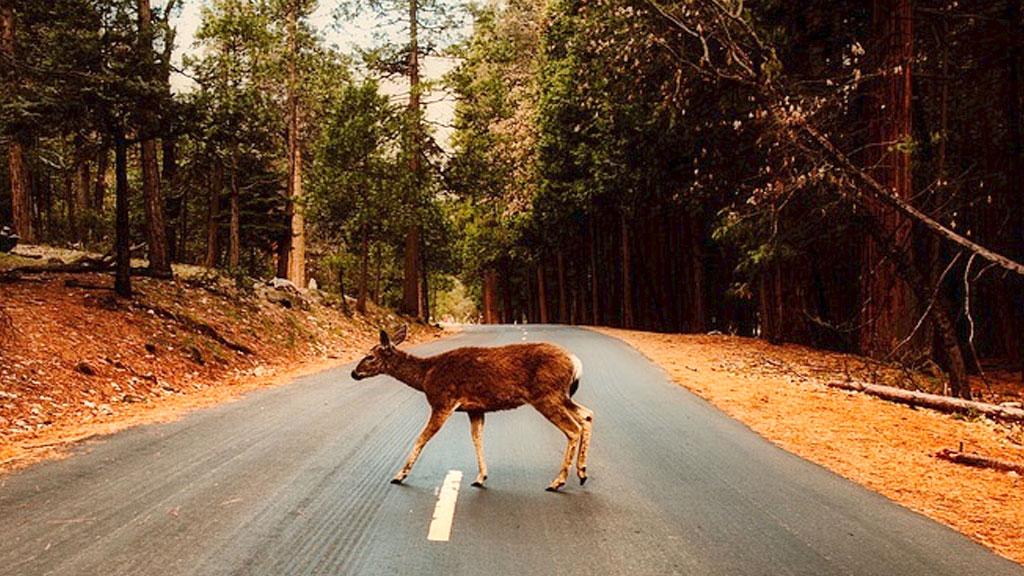 deer-road_1541441066740.jpg
