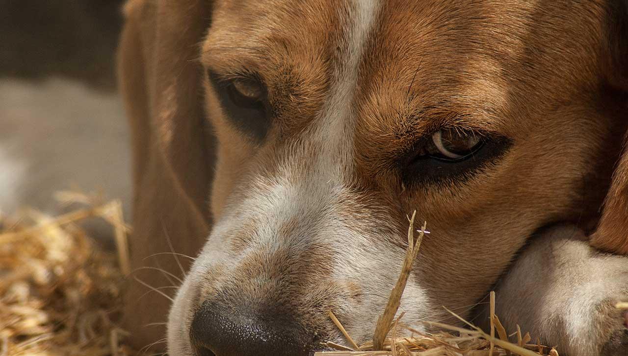 dog-sad_238646