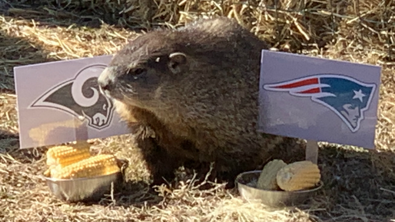 Greta the Groundhog