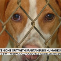 Dog_s_Night_Out_with_Spartanburg_Humane__9_20190327091541