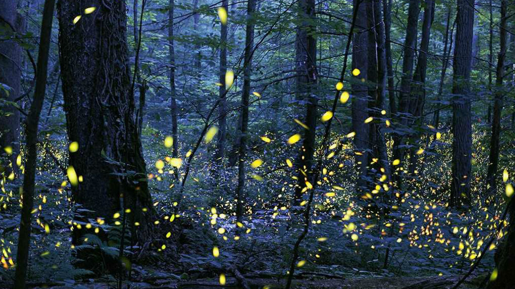 Firefly PROVIDED_1556097841232.jpg.jpg