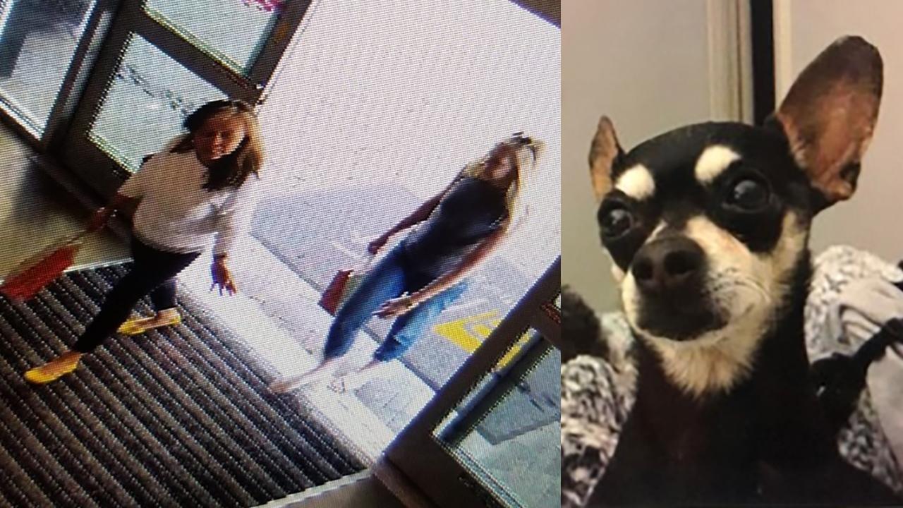 Greenville stolen dog WEB_1555455334329.jpg.jpg