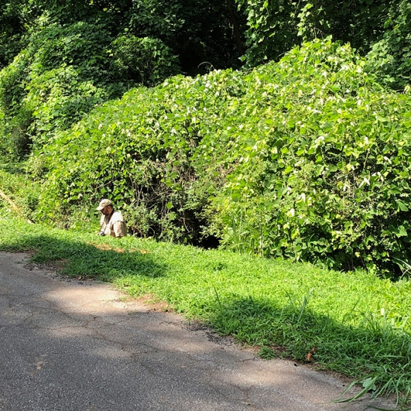 Officer walking out of the search scene where humans remains were found in Seneca, June 19, 2019