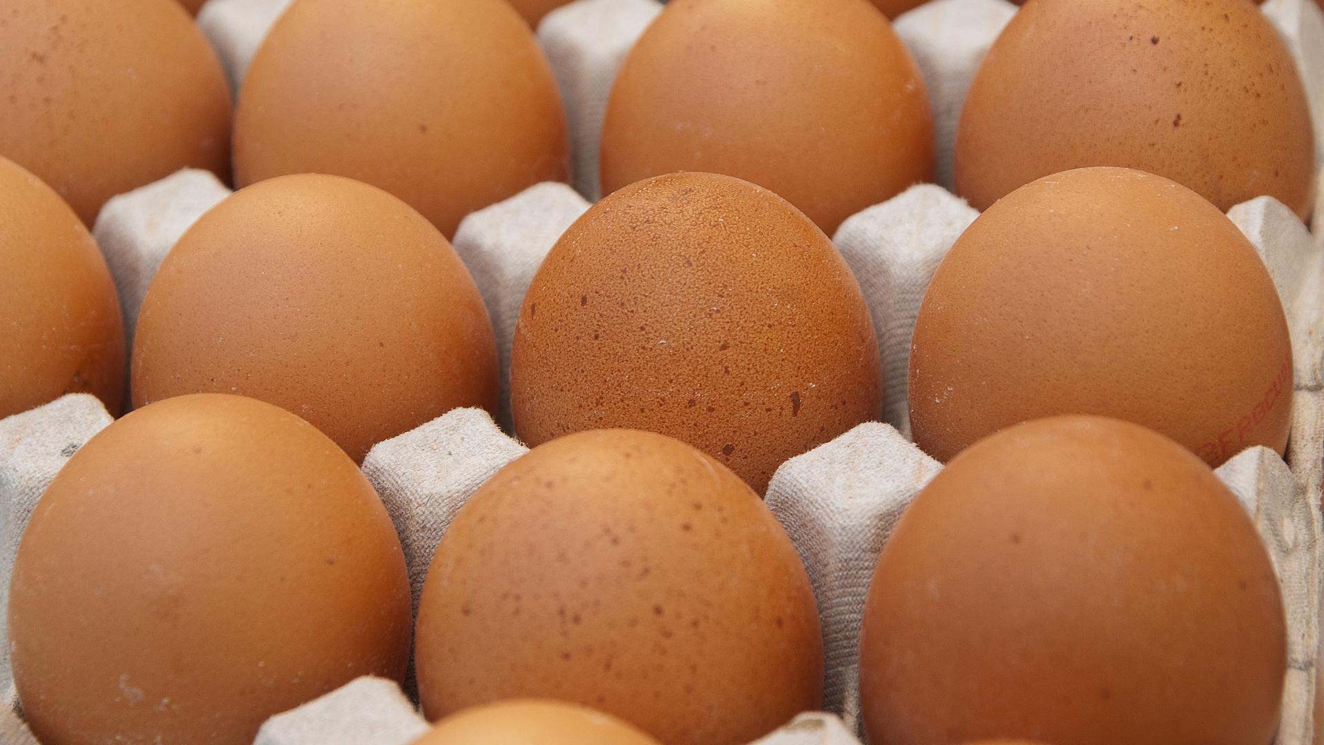 eggs generic egg carton