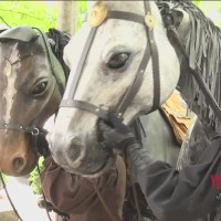 """The Logos Theatre Presents """"The Horse And His Boy"""""""