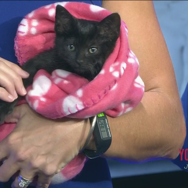 Furry Friend Friday - Meet This Cute Kitten