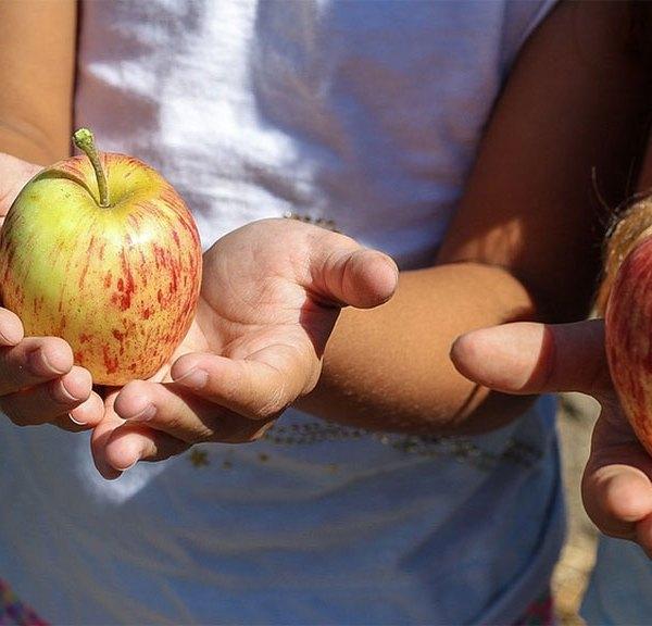 children holding apples
