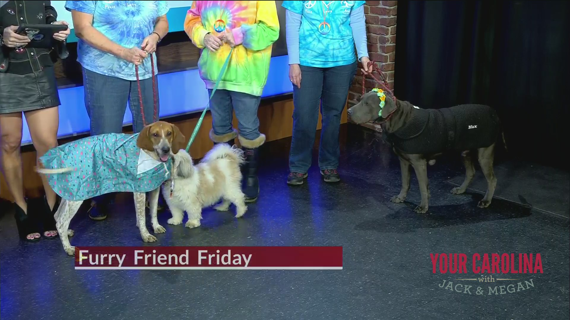 Furry Friend Friday - Foothills Humane Society Free Love Event