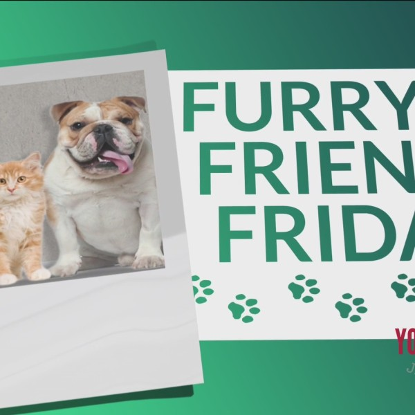 Furry Friend Friday - Help An Animal Find A Forever Home