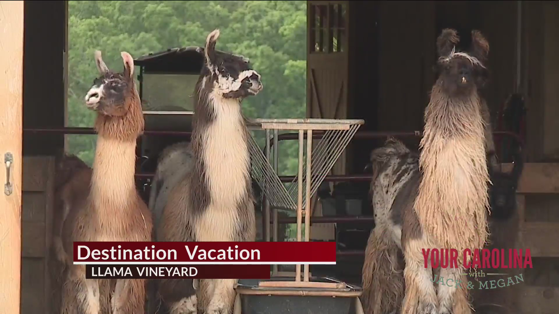 Destination Vacation - Llama Vineyard