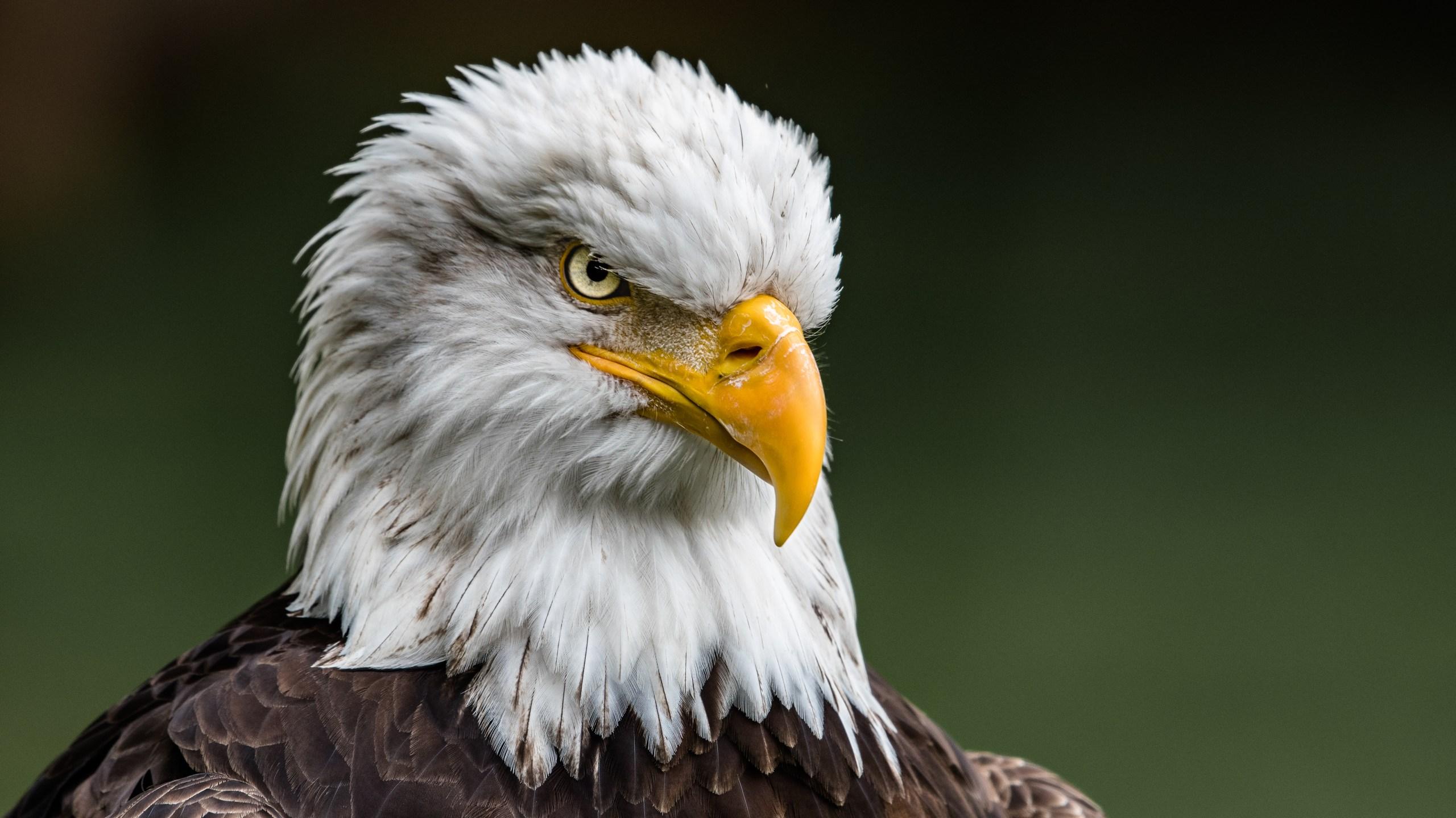 Eagle: 8, Egle: 8  TheSkiDiva.com