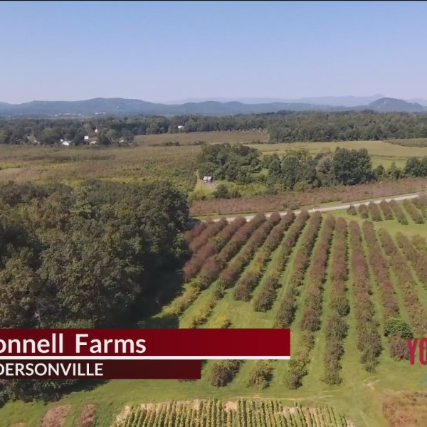 McConnell Farms