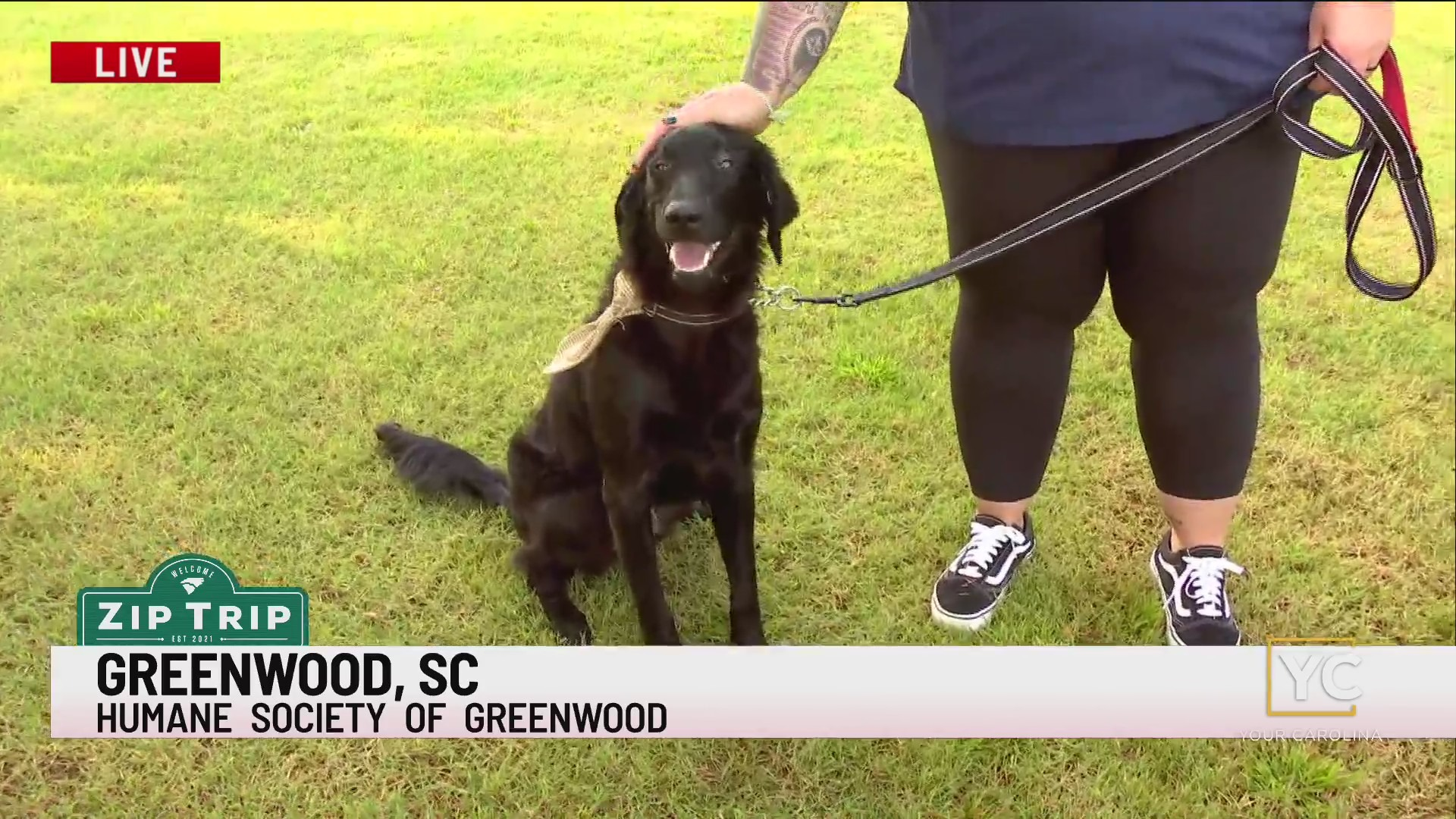 We have a special Zip Trip Furry Friend Friday and Jamarcus is live from Greenwood with the Humane Society of Greenwood.